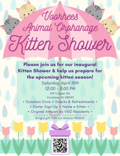 Kitten Shower @ Voorhees Animal Orphanage | Voorhees Township | New Jersey | United States