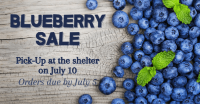 Blueberry Sale @ Voorhees Animal Orphanage | Voorhees Township | New Jersey | United States